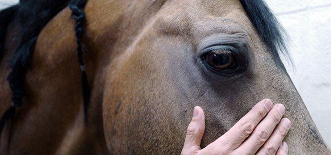 le caravage film cavallo
